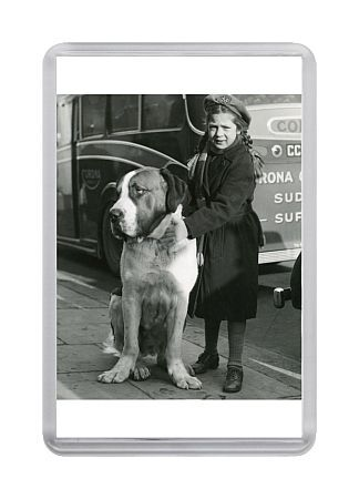 little girl with St Bernard at Crufts, Olympia, London 1950