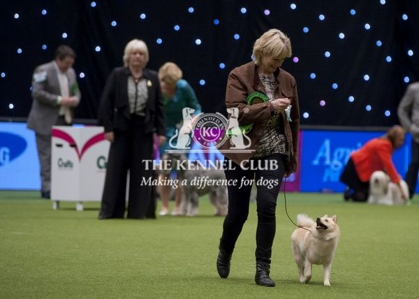 Leaf Kennel Dog Show