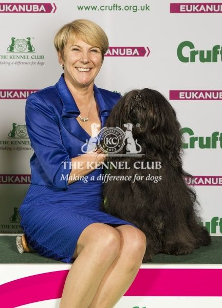 Picture shows Cheryl Johnson from Birmingham with Rutger a Tibetan Terrier, which was the Best of Breed winner today (Sunday 08.03.15), the fourth day of Crufts 2015, at the NEC Birmingham