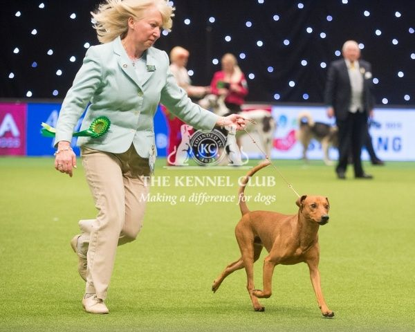 Crufts 2015. The Kennel Club Crufts 2015