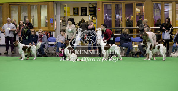 Picture shows Irish Red & White Setter's being judged, (Sunday 11.03.18), the fourth and final day of Crufts 2018, at the NEC Birmingham