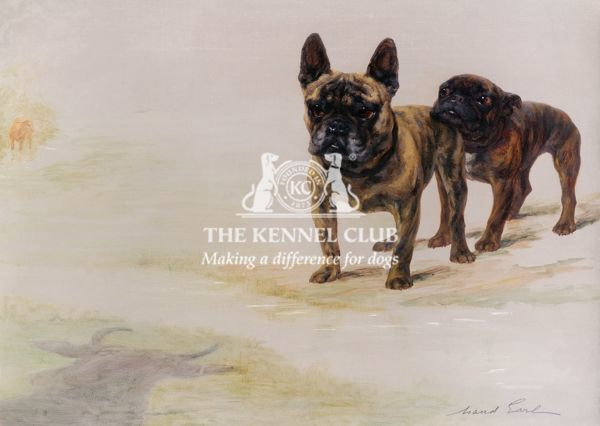 Signed Oil on canvas 18 x 24 ins There was much political infighting between supporters of Toy Bulldogs, Miniature Bulldogs and French Bulldogs: the Kennel Club would not have them, the Bulldog people didn't want them but the French Bulldog
