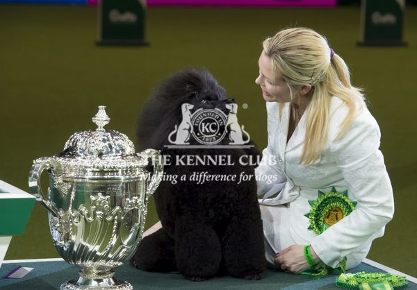 Melanie Harwood from Blackburn with Frankie a Poodle (Miniature), who was Reserve Best in Show winner and was the Best of Breed and Best in Group winner today (Sunday 12.03.17), the fourth day of Crufts 2017, at the NEC Birmingham