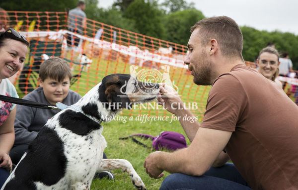 20190526 Copyright James Robinson     Free for editorial use image, please credit: James Robinson     Picture shows: Judging of the Scruffts Family Crossbreed of the Year competition at All about Dogs Chelmsford, Essex, exclusively