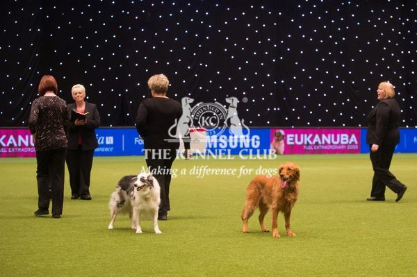 Winners of Obedience Crufts Championship presentation