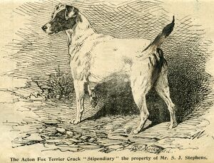 1895 Crufts Fox Terrier entry