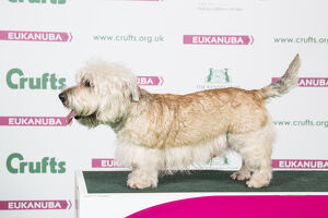 2018 Best of Breed Glen of Imaal Terrier