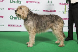 2018 Best of Breed Otterhound