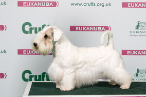 2018 Best of Breed Sealham Terrier
