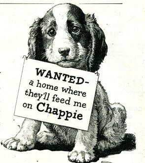 Chappie dog food advert
