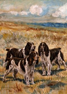 Mrs. Santer's English Springer Spaniels
