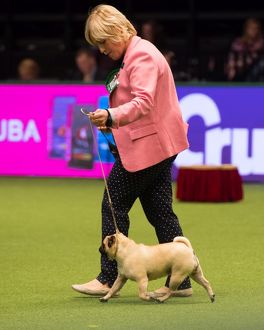 PUG Best of Breed 2017