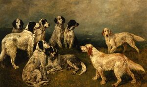Sir Humphrey de Trafford's English Setters
