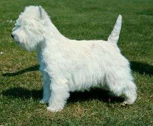 <b>Terrier Group</b><br>Selection of 79 items