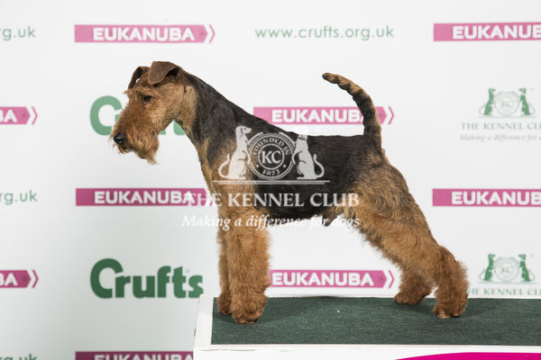 2018 Best of Breed Welsh Terrier