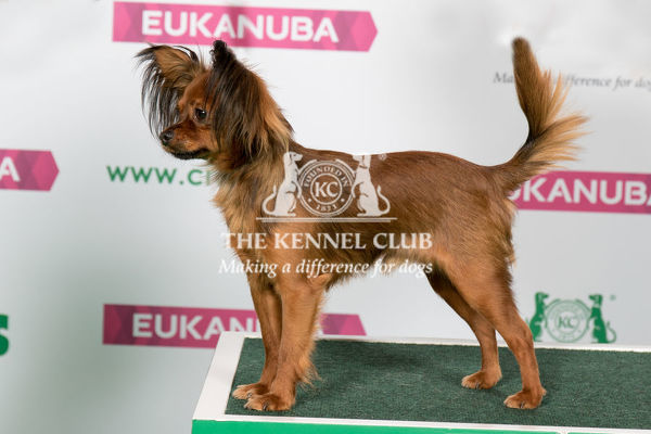 Best of Breed RUSSIAN TOY