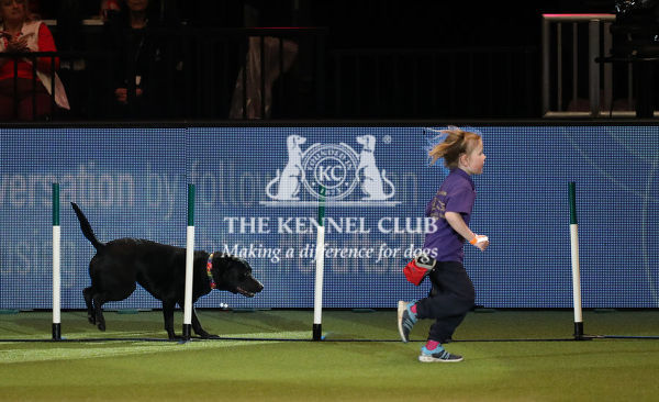 Picture shows Milo, with Izzy (5 years old) partaking in the East Anglian Staffordshire Bull Terrier Display Team, (Thursday 07.03.19) the first day of Crufts 2019 at the NEC, Birmingham