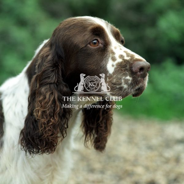 *** Local Caption *** Image by represented photographer Alice Van Kempen. Payment required for any use including the Kennel Club.  For any Kennel Club use, contact the Picture Library to inquire about licensing fee to photographer
