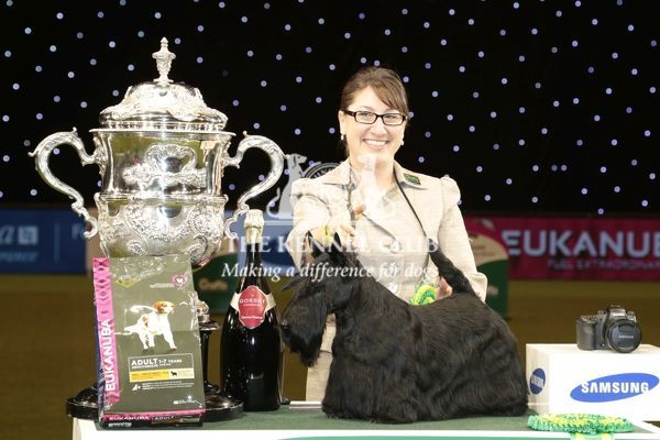 Rebecca Cross from Geithsburg, PA, USA with Kanopa a Scottish Terrier, which won the coveted title of Best in Show, Best of Breed and Best of Group today (Sunday 08.03.15), the fourth and final day of Crufts 2015, at the NEC Birmingham