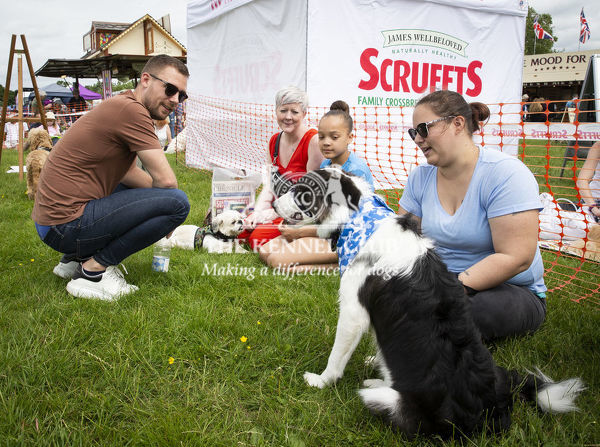 20190526 Copyright James Robinson     Free for editorial use image, please credit: James Robinson     Picture shows: Judging of the Scruffts Family Crossbreed of the Year competition at All about Dogs Chelmsford, Essex, exclusively supported