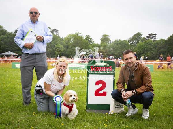 20190526 Copyright James Robinson     Free for editorial use image, please credit: James Robinson     Picture shows: Finalists of class Julia Allwright and Fleur who came second in Prettiest Crossbreed Bitch at the Judging of the Scruffts Family