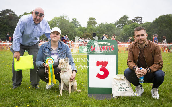20190526 Copyright James Robinson     Free for editorial use image, please credit: James Robinson     Picture shows: Finalists of class Kasey Carlin and Maggie who came third in Prettiest Crossbreed Bitch at the Judging of the Scruffts Family