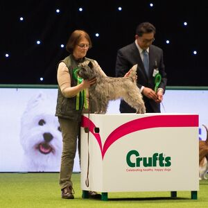 CAIRN TERRIER Best of Breed Crufts 2017