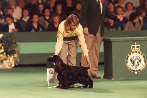 <b>Crufts 1990s</b><br>Selection of 5 items