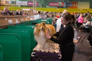 <b>Crufts 2015</b><br>Selection of 2888 items