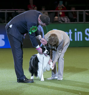 <b>Crufts 2018</b><br>Selection of 14 items