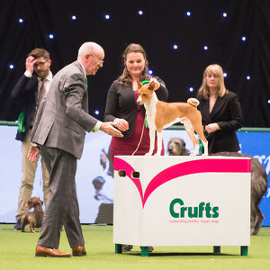 Hound Group judging