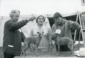 Italian Greyhounds showing 1967