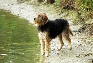 represented dog photographers/alice van kempen/looking lake water river outside grass black