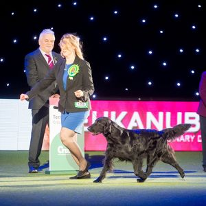 crufts 2015/reserve bis seuuch nouch castlerock simply magic